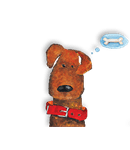 immagine-fronte-ombra-aldog-agnello-3